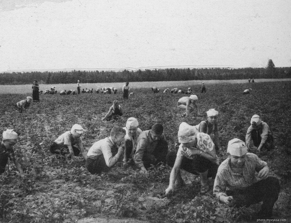 На прополке кукурузы. Выкса — фото старой Выксы