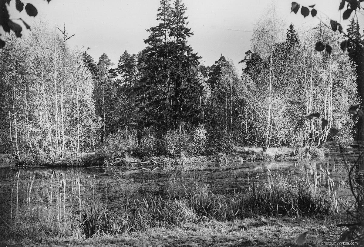Лебединка пруд. Выкса — фото старой Выксы