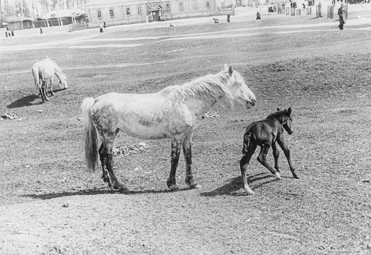 Лошади на Красной площади. Выкса — фото старой Выксы
